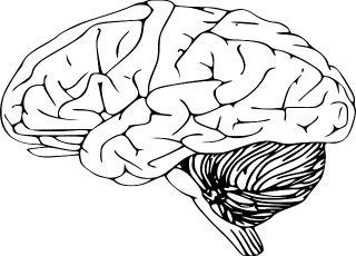 brain-312007_640